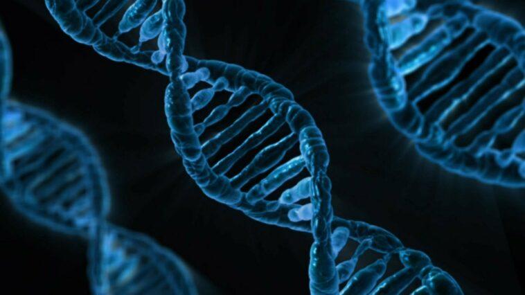 Solution de machine learning pour le cancer du pancréas